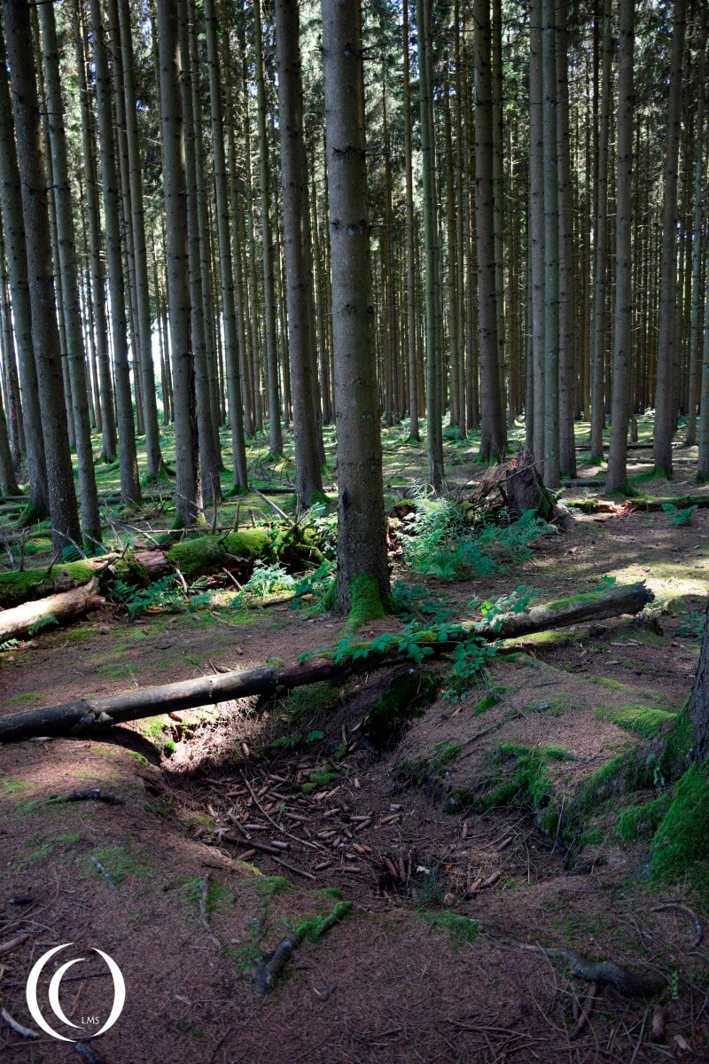Foxhole of Easy Company in Jack's Forrest - Foy, Bastogne
